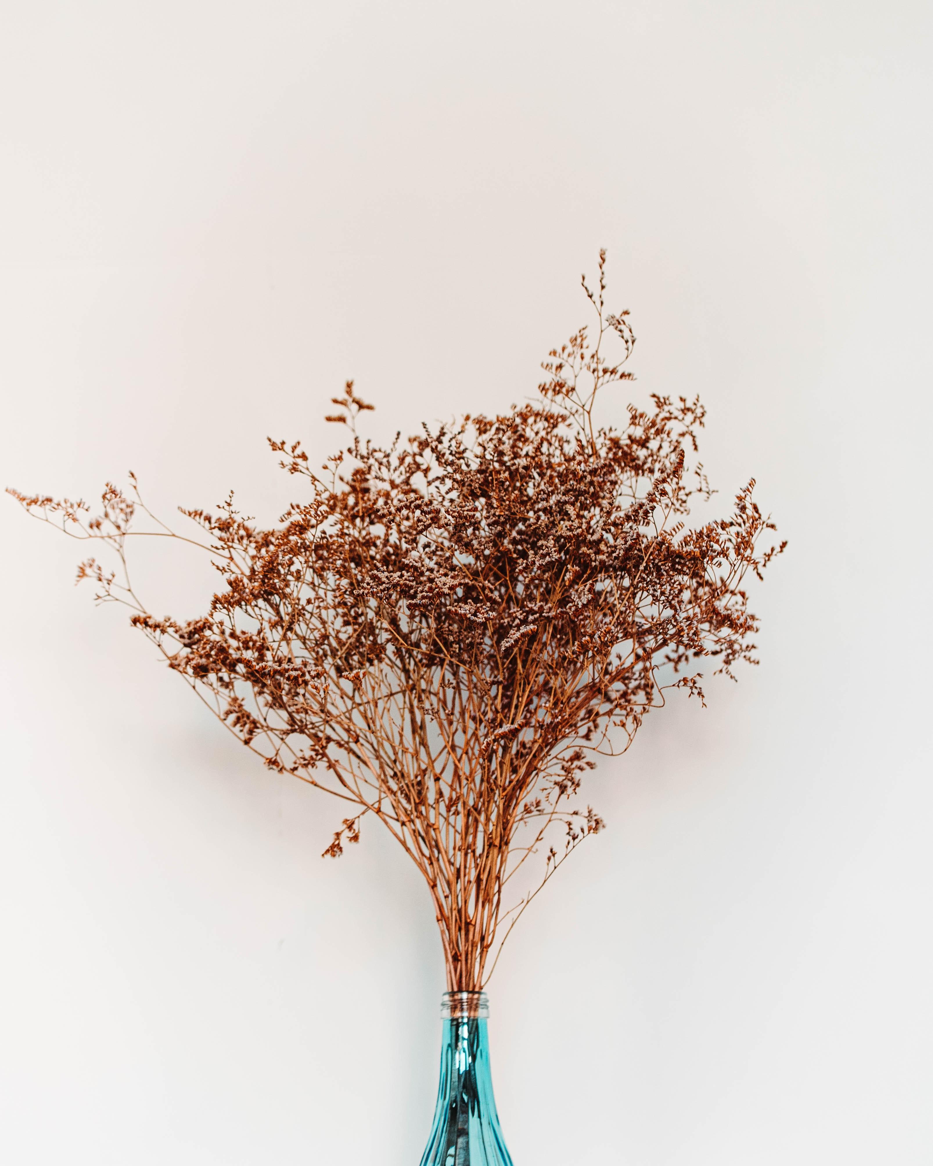 autumn-branch-color-2977302